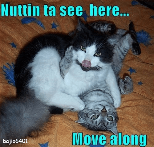 funny cat memes nothing to see here - 9284236544