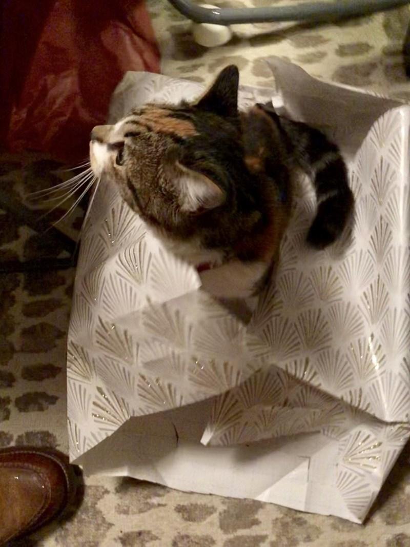 Cat - 0000