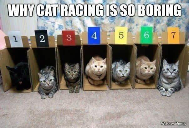 cat meme - Cat - WHY CAT RACING IS SO BORING 5 6 7 3 2 Weknow Memes