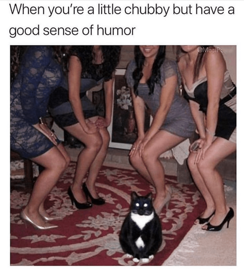 cat meme - Photo caption - When you're a little chubby but have a good sense of humor OMaciP