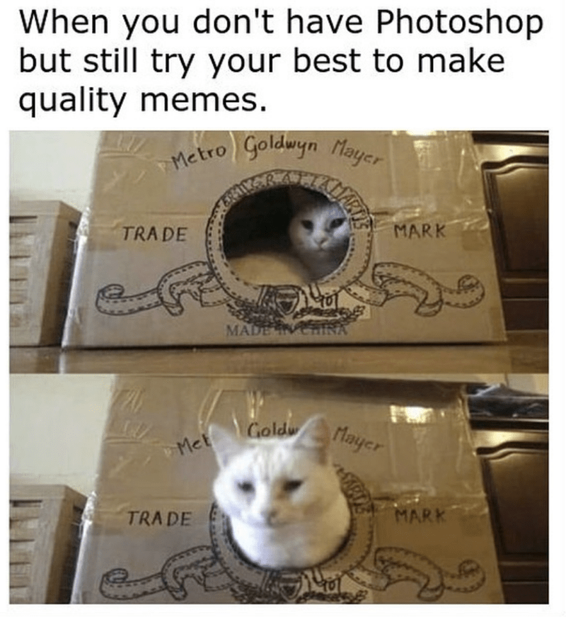 cat meme - Cat - When you don't have Photoshop but still try your best to make quality memes. TMetro Goldwyn Mayer MARK TRADE MADE INA Met Goldwlayer MARK TRADE