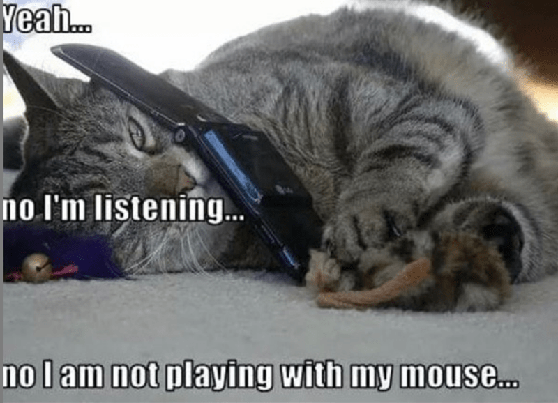 cat meme - Cat - Yeah... no I'm listening... no l am not playing with my mouse...