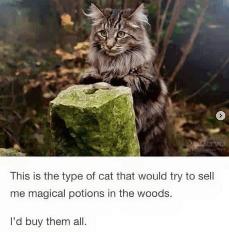 cat meme - Cat - OVU This is the type of cat that would try to sell me magical potions in the woods. l'd buy them all.