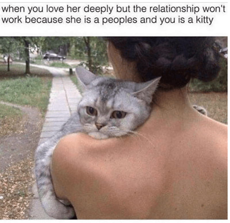 cat meme - Cat - when you love her deeply but the relationship won't work because she is a peoples and you is a kitty