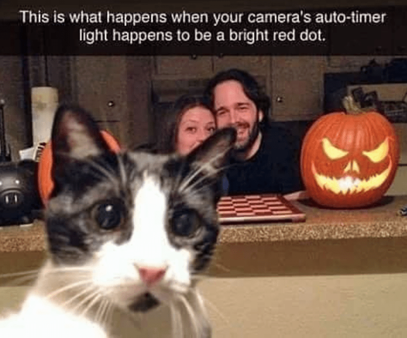 cat meme - Cat - This is what happens when your camera's auto-timer light happens to be a bright red dot.