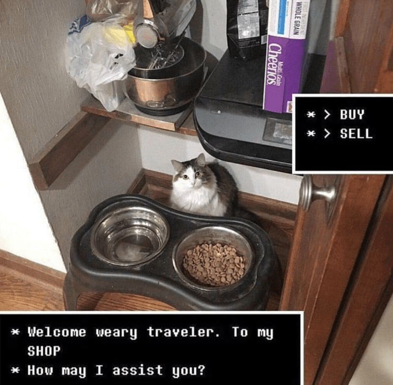 cat meme - Drawer - BUY SELL Welcome weary traveler. To my SHOP How may I assist you? FIRST INGREDIE WHOLE GRAIN Multi Grain Cheerios