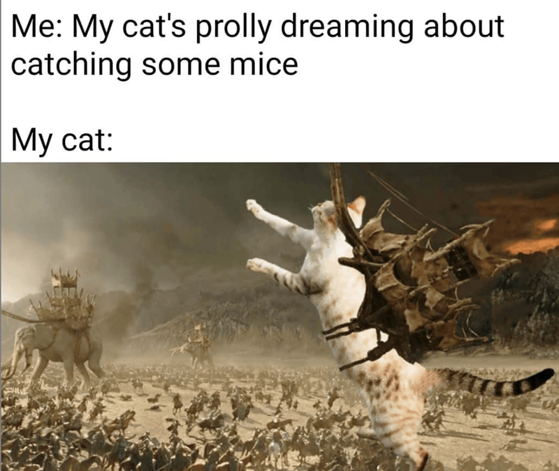 cat meme - Adaptation - Me: My cat's prolly dreaming about catching some mice Му cat: