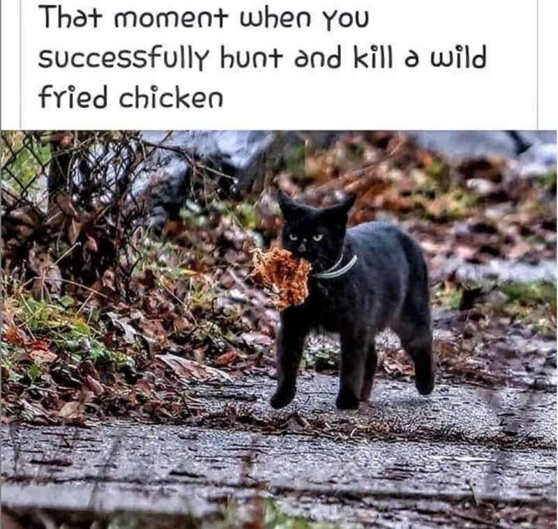 cat meme - Mammal - That moment when You SUccessfully hunt and kill a wild fried chicken