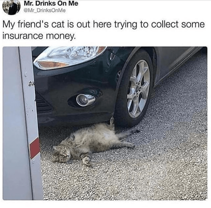 cat meme - Vehicle door - Mr. Drinks On Me @Mr DrinksOnMe My friend's cat is out here trying to collect some insurance money.