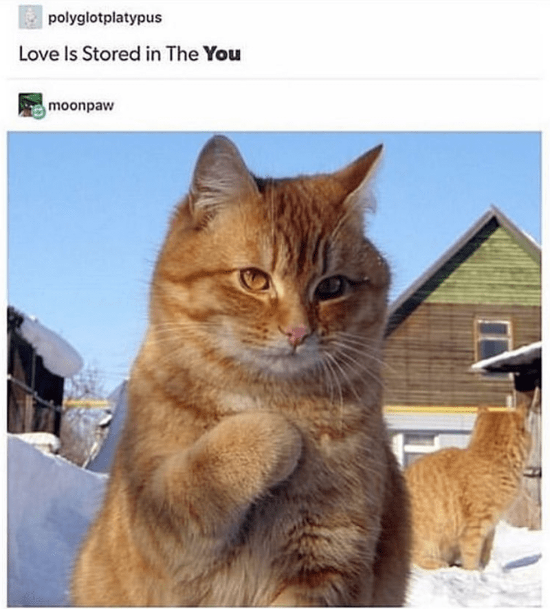 cat meme - Cat - polyglotplatypus Love Is Stored in The You moonpaw