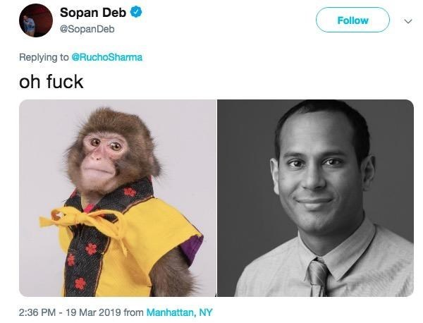 monkey journalist compared to a real journalists headshot