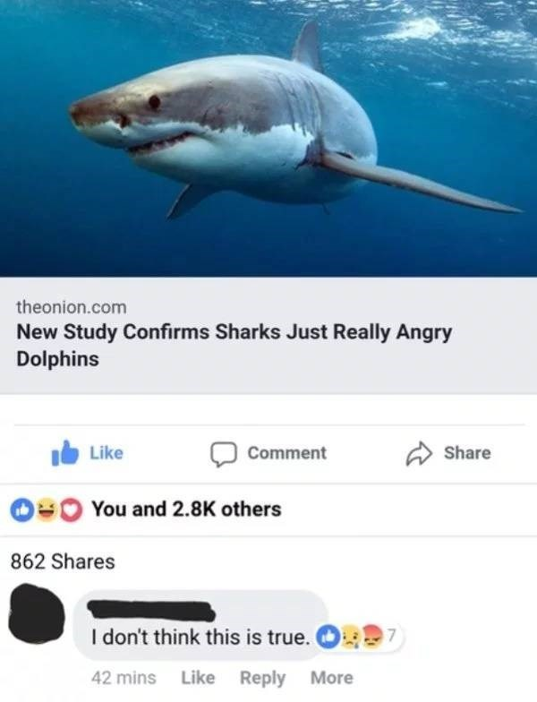 Fish - theonion.com New Study Confirms Sharks Just Really Angry Dolphins Comment Share Like You and 2.8K others 862 Shares I don't think this is true. 7 42 mins Like Reply More