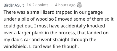 Text - BirdInASuit 16.2k points 4 hours agoS There was a small lizard trapped in our garage under a pile of wood so I moved some of them so it could get out. I must have accidentally knocked over a larger plank in the process, that landed on my dad's car and went straight through the windshield. Lizard was fine though
