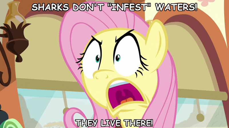 incorrect my little pony quotes screencap buckball season ponify fluttershy - 9284510976