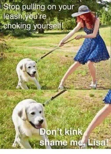 Dog - Stop pulling on your leash you're choking yourselfL Don't kink shame me Lisal