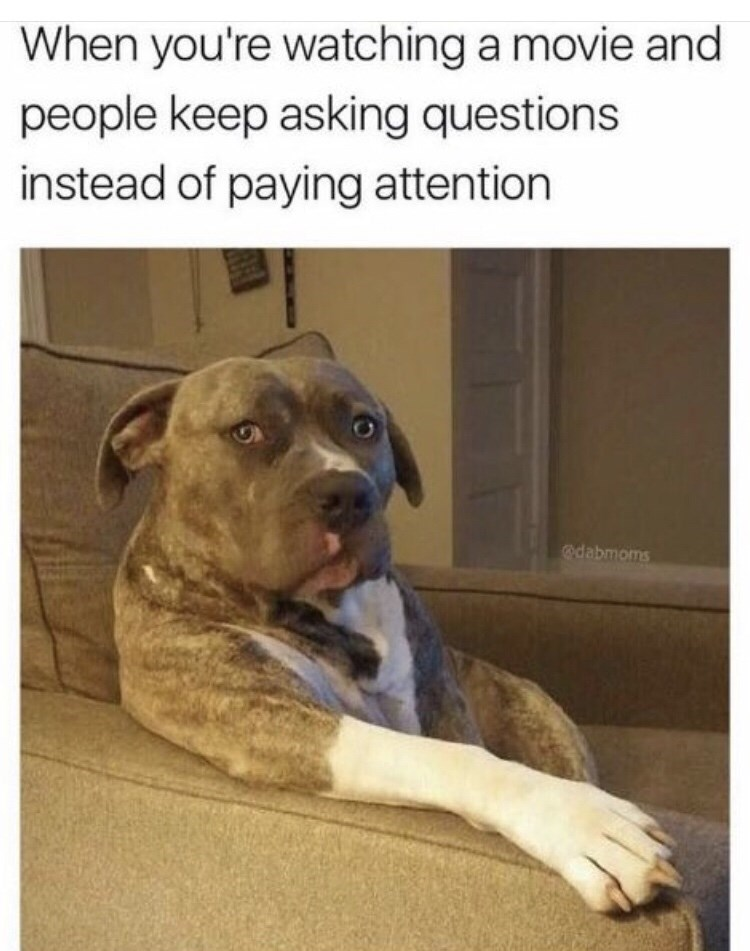Dog - When you're watching a movie and people keep asking questions instead of paying attention odabmoms