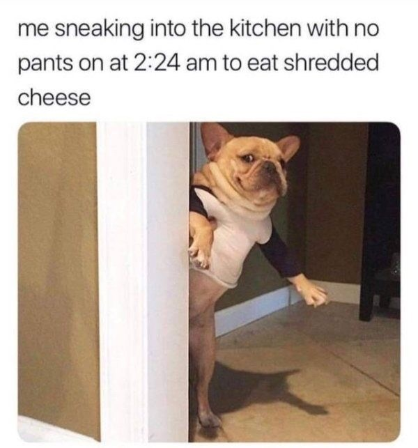 Dog - me sneaking into the kitchen with no pants on at 2:24 am to eat shredded cheese