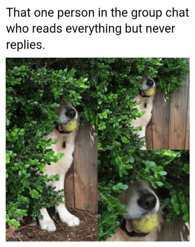 Adaptation - That one person in the group chat who reads everything but never replies.