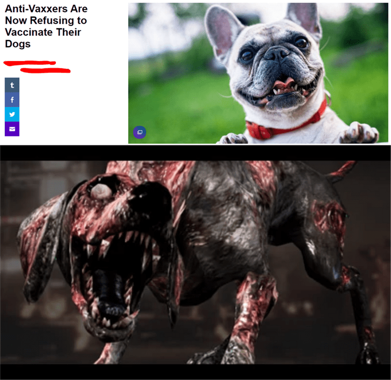 Dog breed - Anti-Vaxxers Are Now Refusing to Vaccinate Their Dogs t f