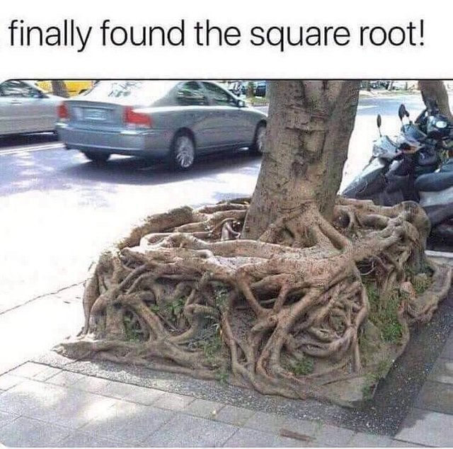 literal jokes - Tree - finally found the square root!