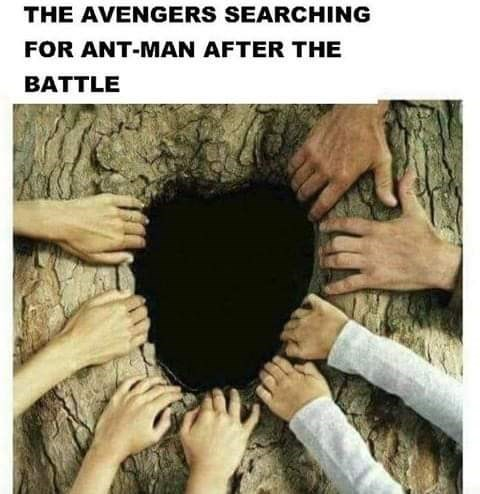 Tree - THE AVENGERS SEARCHING FOR ANT-MAN AFTER THE BATTLE