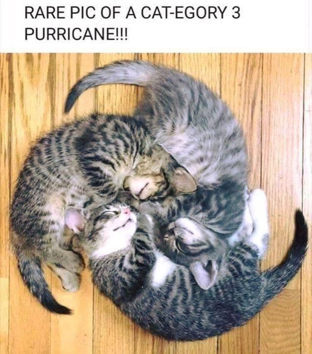 monday meme of a hurricane of kittens
