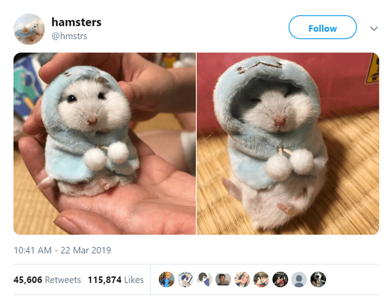 Hamster - hamsters @hmstrs Follow VM 10:41 AM 22 Mar 2019 45,606 Retweets 115,874 Likes
