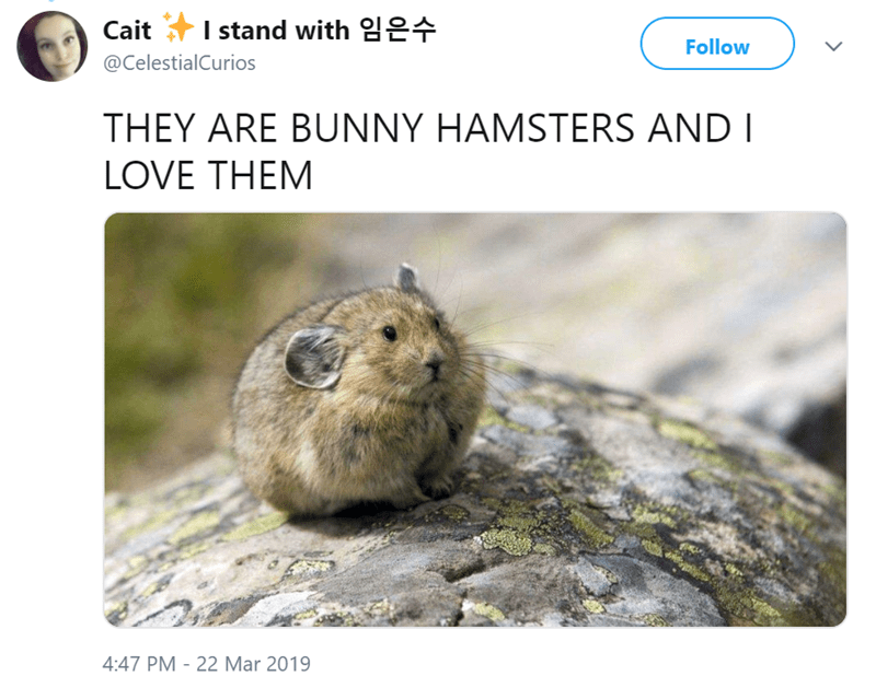 Gopher - Caitstand with Follow @CelestialCurios THEY ARE BUNNY HAMSTERS AND I LOVE THEM 4:47 PM - 22 Mar 2019