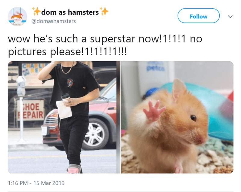 Hamster - dom as hamsters Follow @domashamsters wow he's such a superstar now!1!!!1 no pictures please!1!1!!!!! CHARL E petos HOE EPAIR 1:16 PM 15 Mar 2019