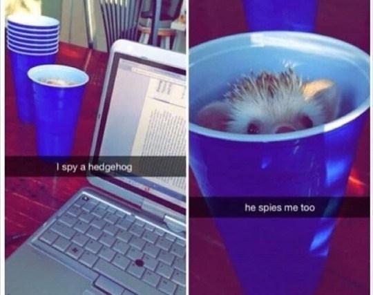 Violet - I spy a hedgehog he spies me too
