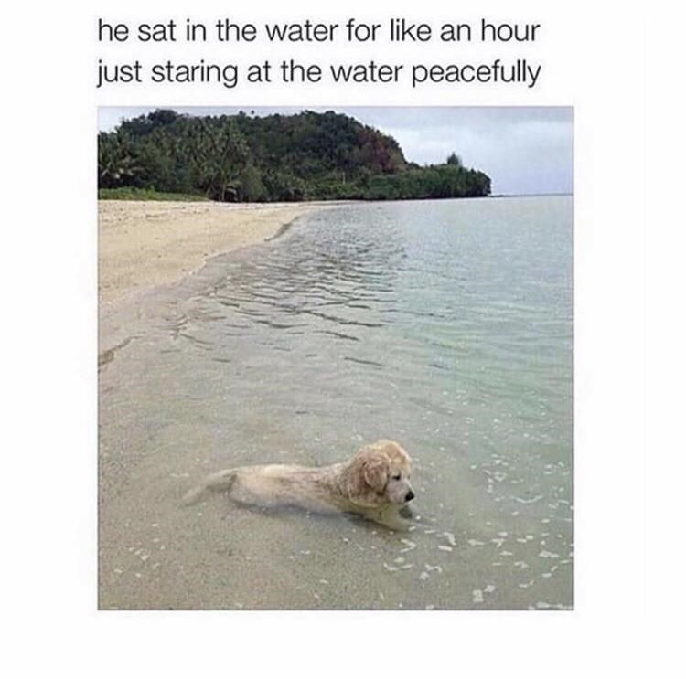 Dog - he sat in the water for like an hour just staring at the water peacefully