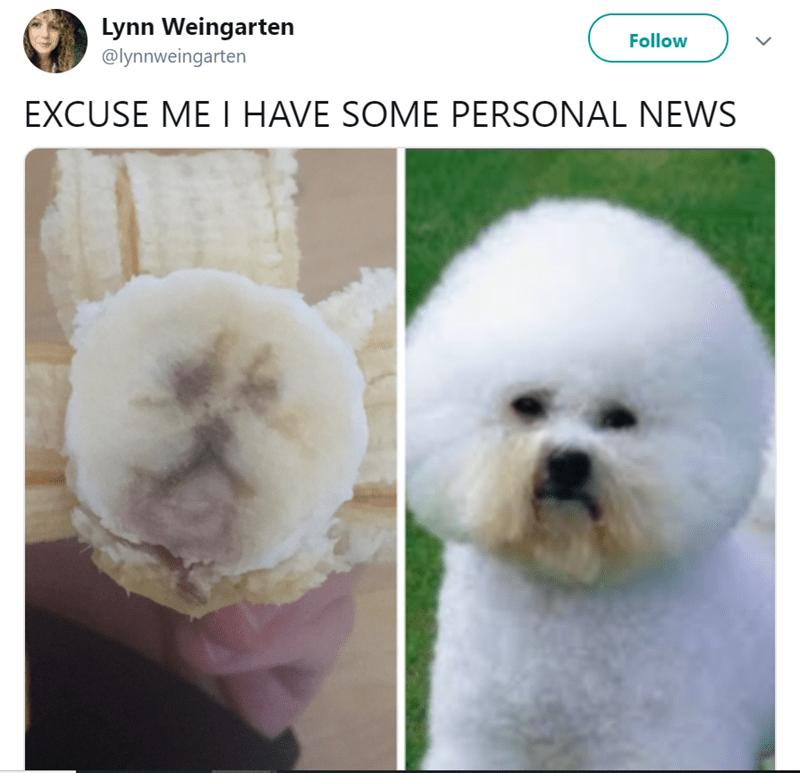 Dog - Lynn Weingarten Follow @lynnweingarten EXCUSE ME I HAVE SOME PERSONAL NEWS >