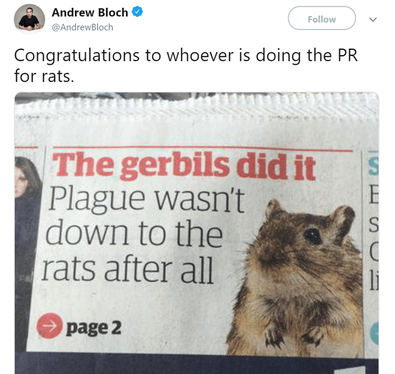 Groundhog day - Andrew Bloch Follow @AndrewBloch Congratulations to whoever is doing the PR for rats. The gerbils did it Plague wasn't down to the rats after all S page 2