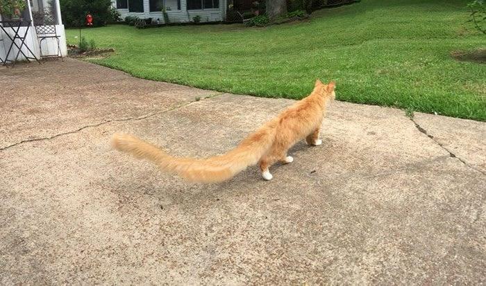 panoramic fails - Cat