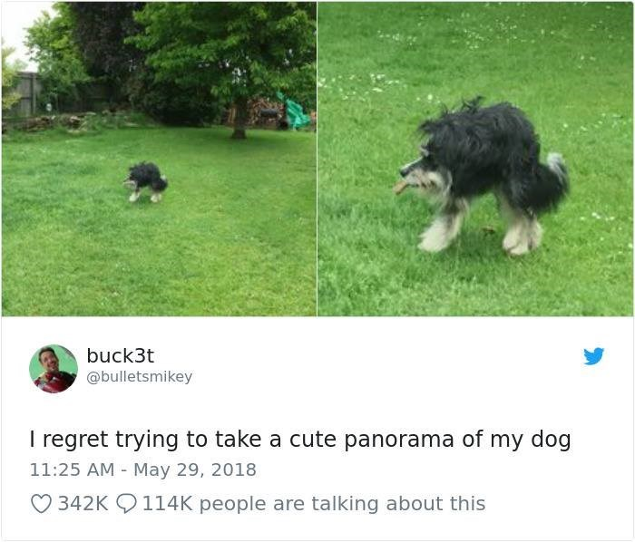 panoramic fails - Dog - buck3t @bulletsmikey I regret trying to take a cute panorama of my dog 11:25 AM May 29, 2018 342K 114K people are talking about this