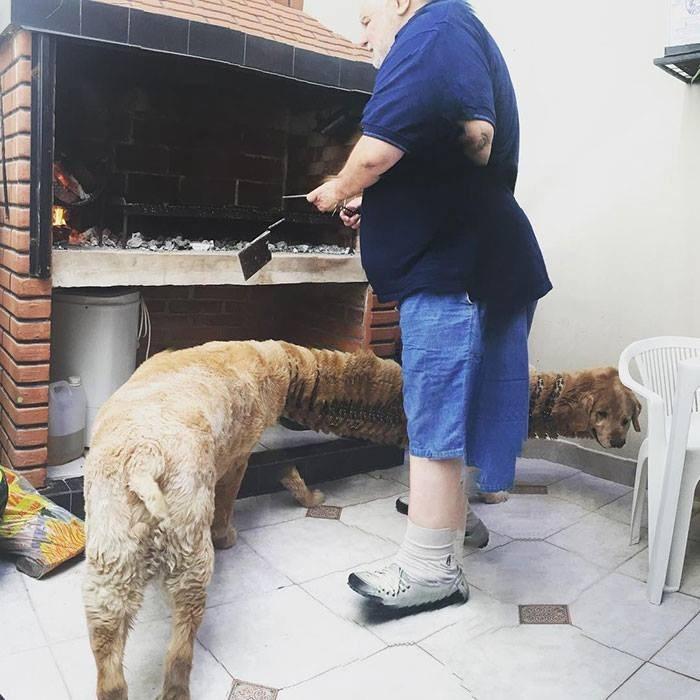 panoramic fails - Dog