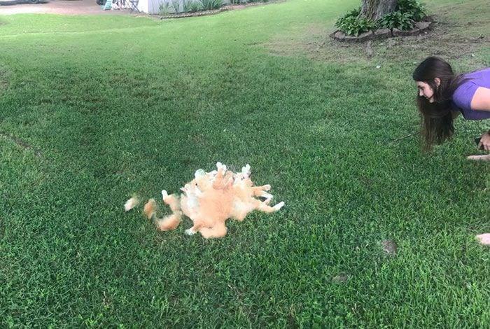 panoramic fails - Lawn