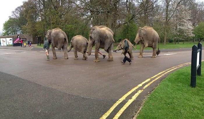 panoramic fails - Elephant