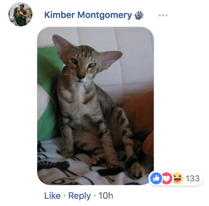 Cat - Kimber Montgomery D133 Like Reply 10h