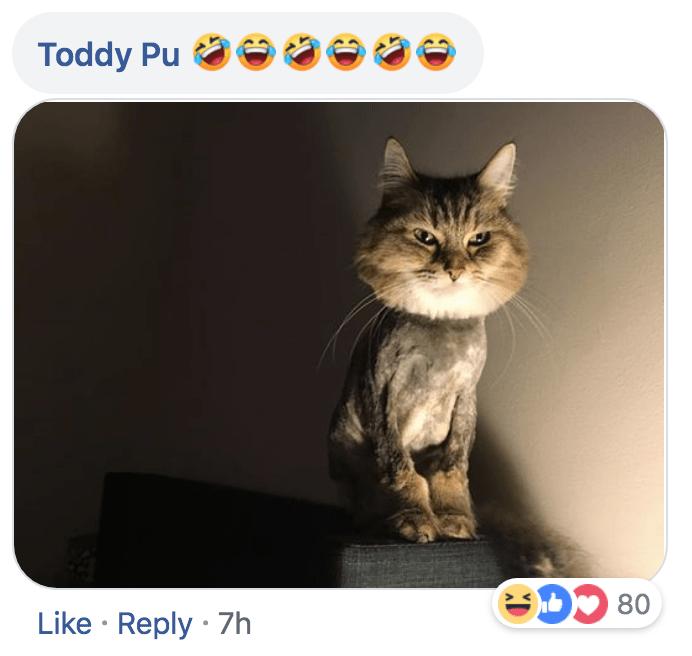 Cat - Toddy Pu Like Reply 7h