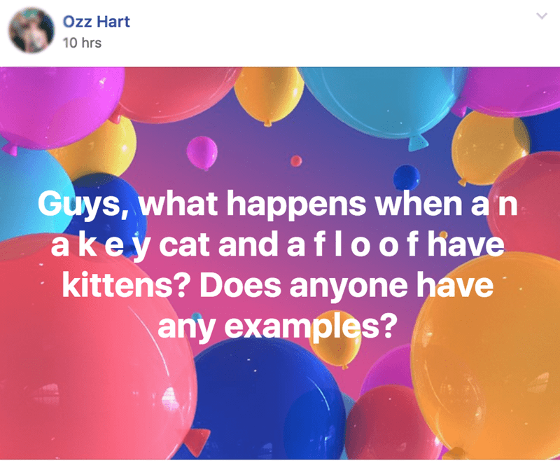 Balloon - Ozz Hart 10 hrs Guys, what happens when an akey cat and a f lo o f have kittens? Does anyone have any examples?