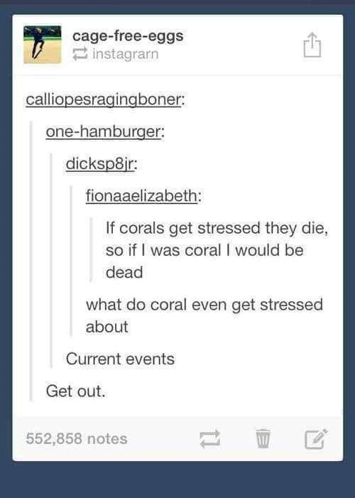 Text - cage-free-eggs instagrarn calliopesragingboner: one-hamburger: dicksp8ir fionaaelizabeth: If corals get stressed they die, so if I was coral I would be dead what do coral even get stressed about Current events Get out. 552,858 notes