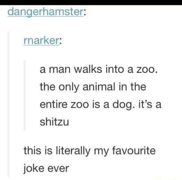 Text - dangerhamster: rnarker: a man walks into a zoo. the only animal in the entire zoo is a dog. it's a shitzu this is literally my favourite joke ever