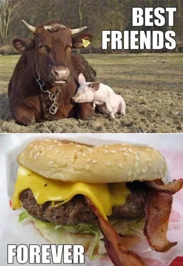 sad meme about a cow and a pig staying together in a bacon wrapped burger