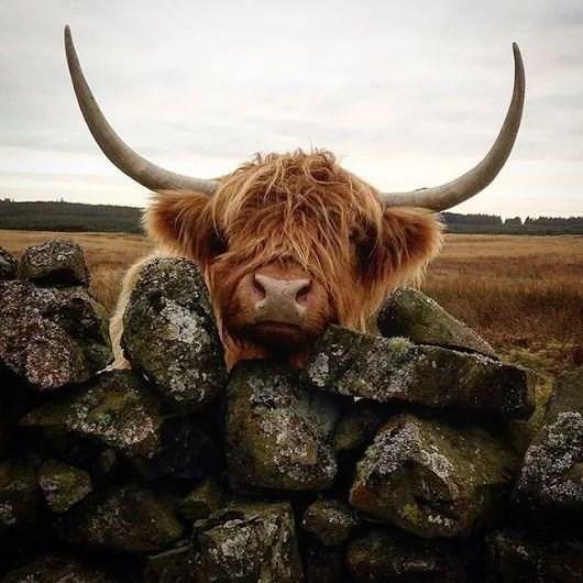 cute animals - Horn