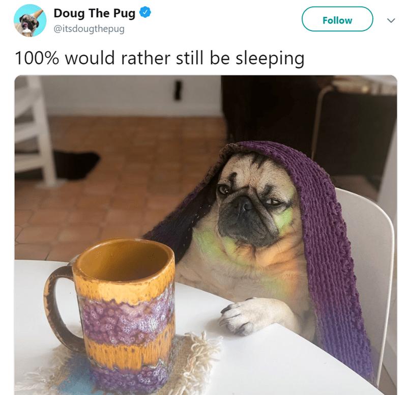 Pug - Doug The Pug Follow @itsdougthepug 100% would rather still be sleeping 2003