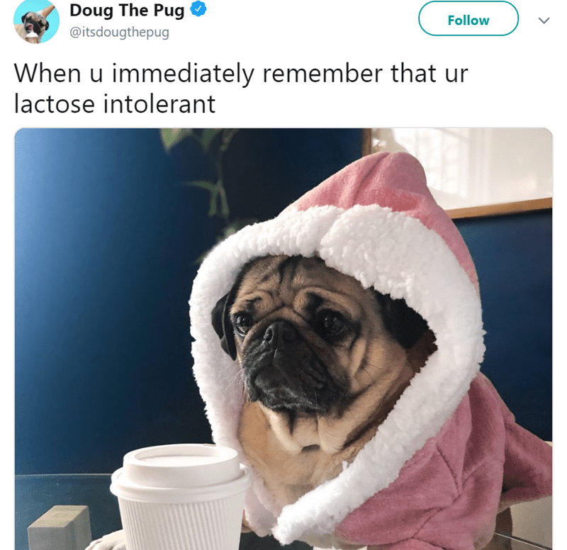 Pug - Doug The Pug Follow @itsdougthepug When u immediately remember that ur lactose intolerant