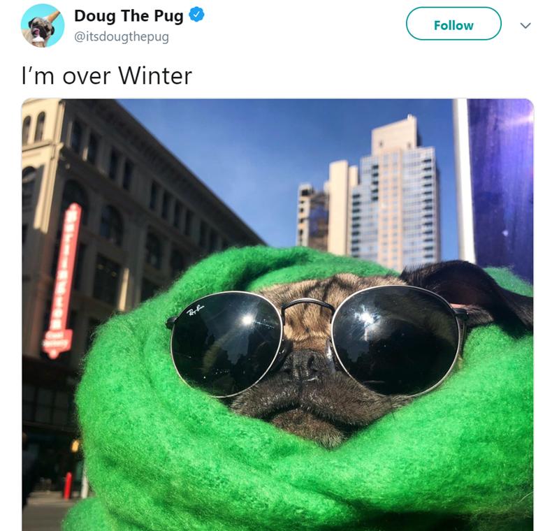 Eyewear - Doug The Pug @itsdougthepug Follow I'm over Winter