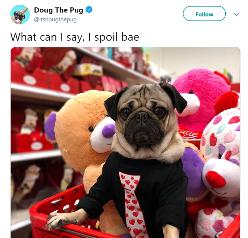 Dog - Follow Doug The Pug @itsdougthepug What can I say, I spoil bae Fucie