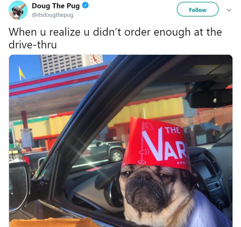 Vehicle door - Doug The Pug @itsdougthepug Follow When u realize u didn't order enough at the drive-thru THE NAR www.